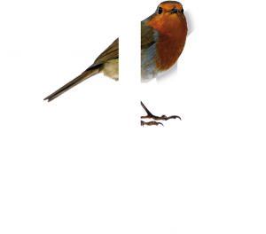big-garden-birdwatch