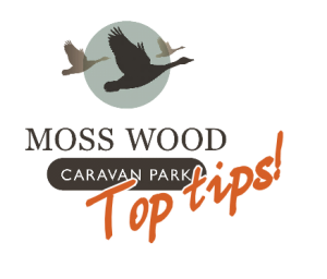 moss-wood-top-tips