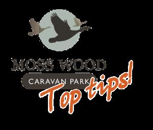 moss-wood-top-tips