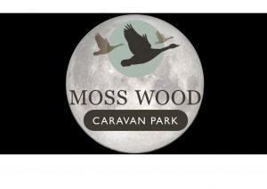Moss Wood at Night