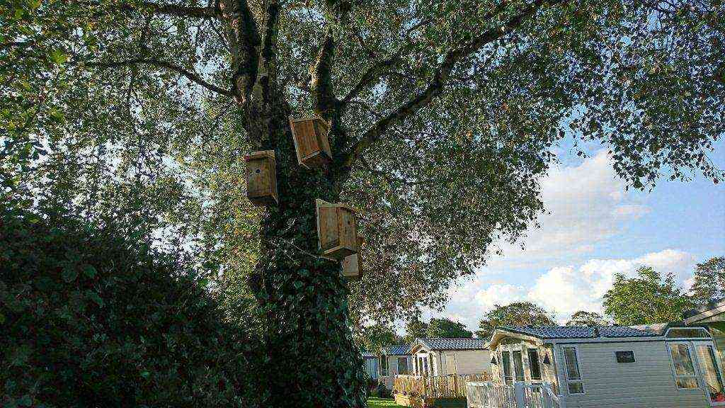 Bird boxes by static caravan holiday homes