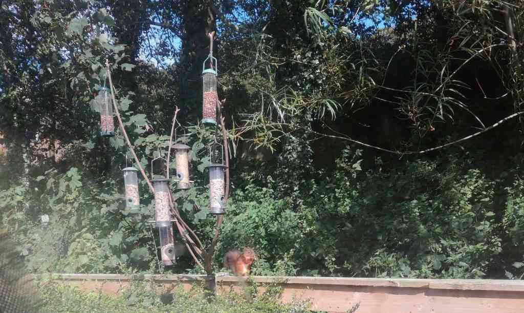 Red Squirrel Lancaster