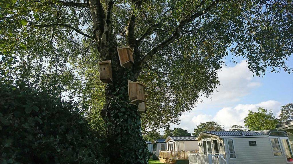 Sustainable Tourism at Moss Wood Caravan Park