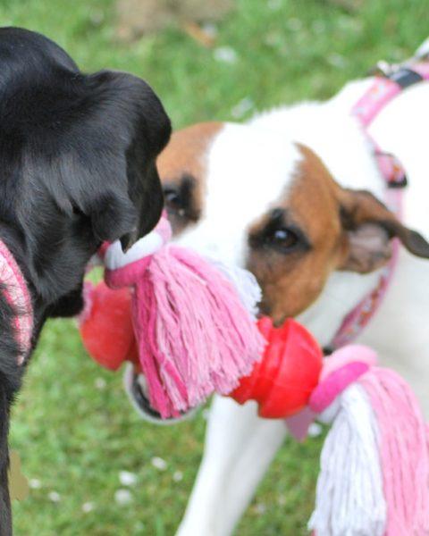 Pet & Dog Friendly Caravan Park in Cockerham, Lancashire - Moss Wood
