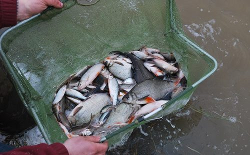 Fish you can catch at Moss Wood