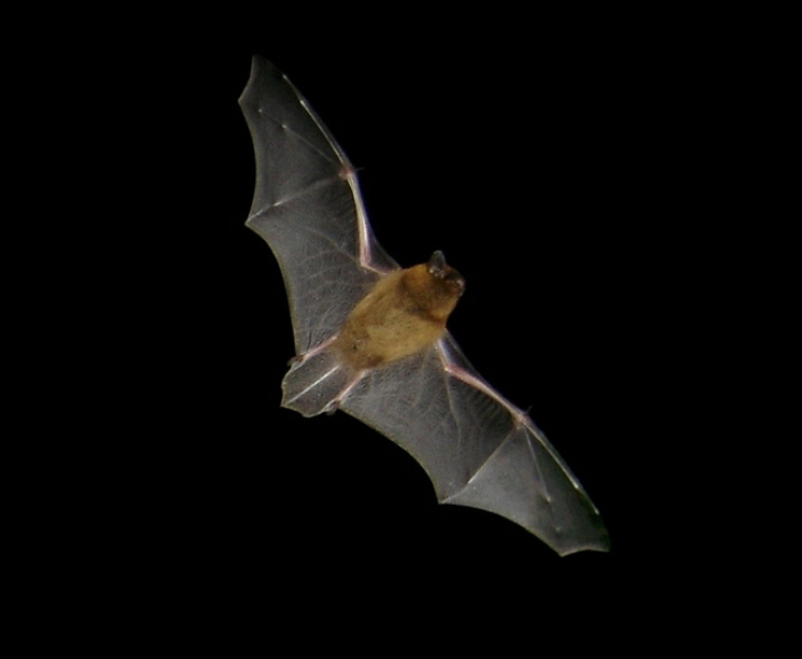 Bat on Bat Walk at Moss Wood Caravan Park in Lancashire