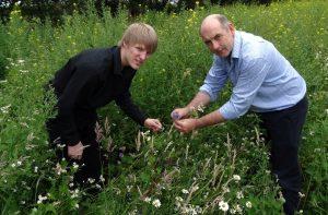 Gardening Wildflowers at Moss Wood Caravan Park