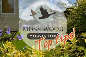 Moss Wood Caravan Park Top Tips