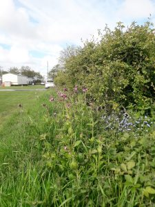 Healthy Hedgerow